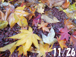 13_1209_iroha_k1.jpg