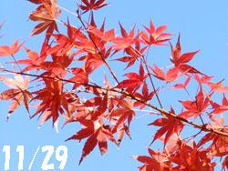 13_1211_iroha_k1.jpg