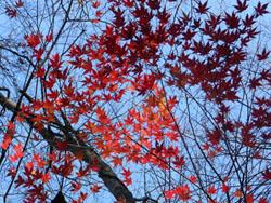 13_1226_iroha_k1.jpg