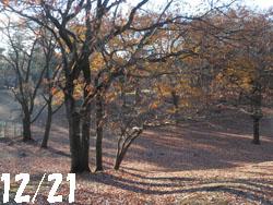 13_1231_park.jpg