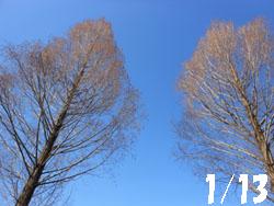 14_0124_metasequoia1.jpg