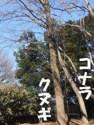 14_0125_kona_kunu1.jpg