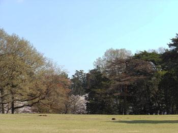14_0420_zokibayasi2.jpg