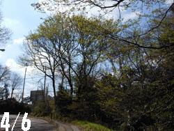 14_0421_sakamiti.jpg