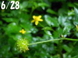 14_0712_kitune_b1.jpg
